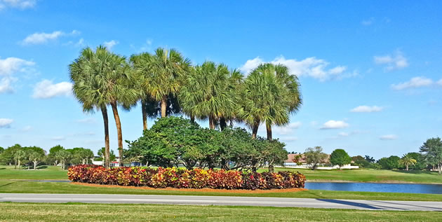 Web Design for Florida Landscaping Company